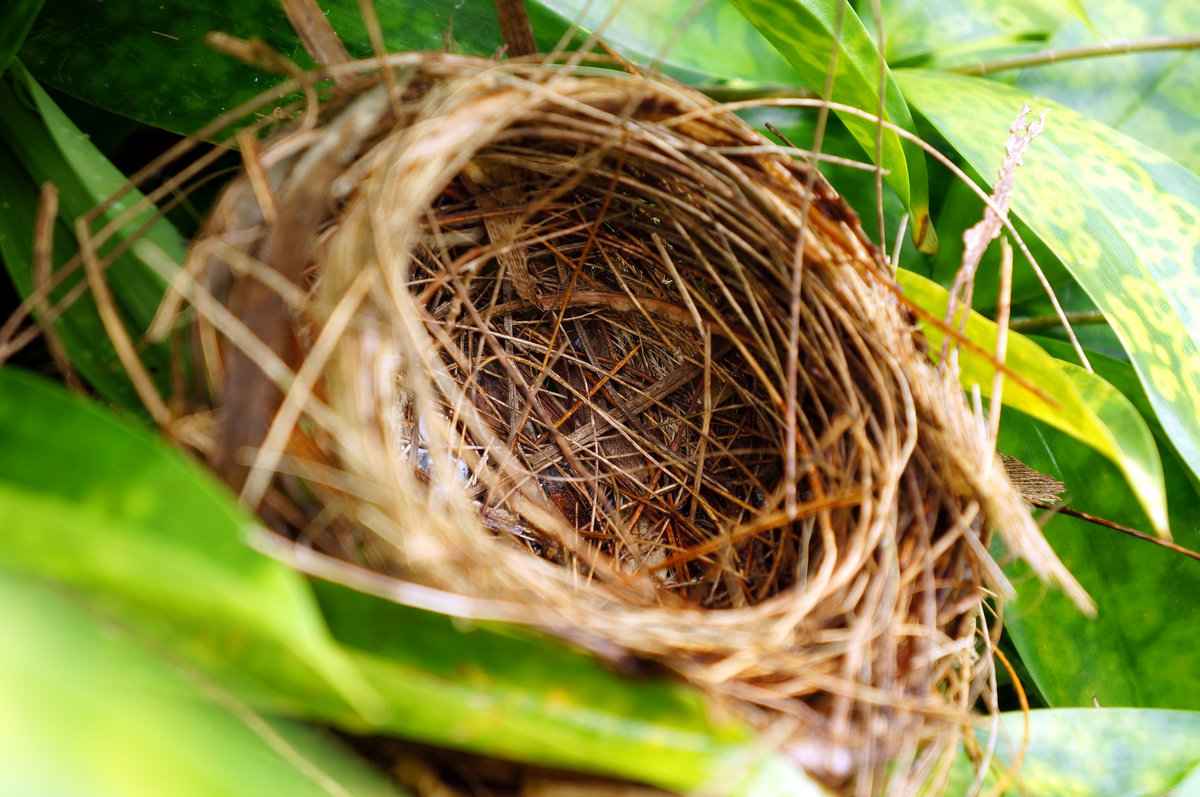 preparing for the empty nest, adjusting to the empty nest, empty nest syndrome, empty nest adjustment, empty nest transition, transition to the empty nest, empty nest, empty nester, becoming an empty nester