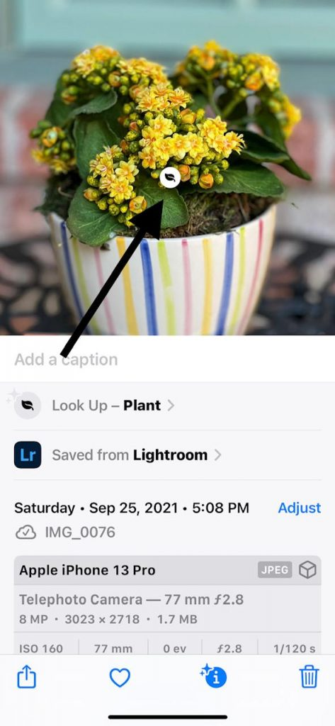 screenshot for how to use the ios 15 Visual Lookup button
